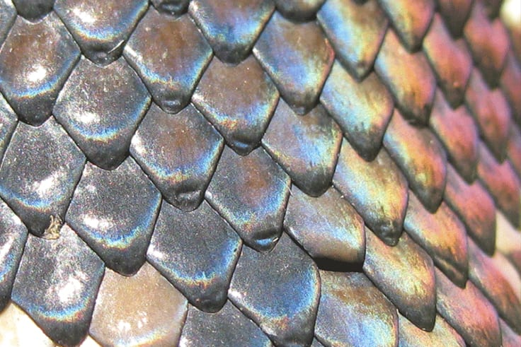 Scales2
